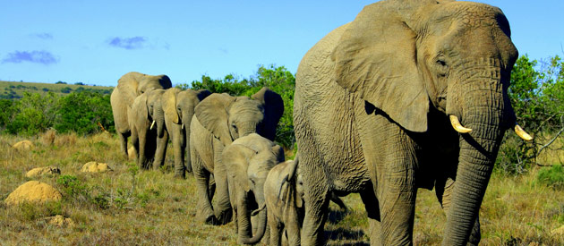 5 reasons why your next family adventure should be an African safari